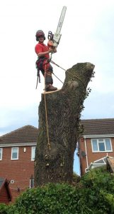 Tree surgery Leicester