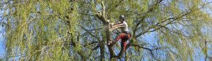 Woods Tree Care