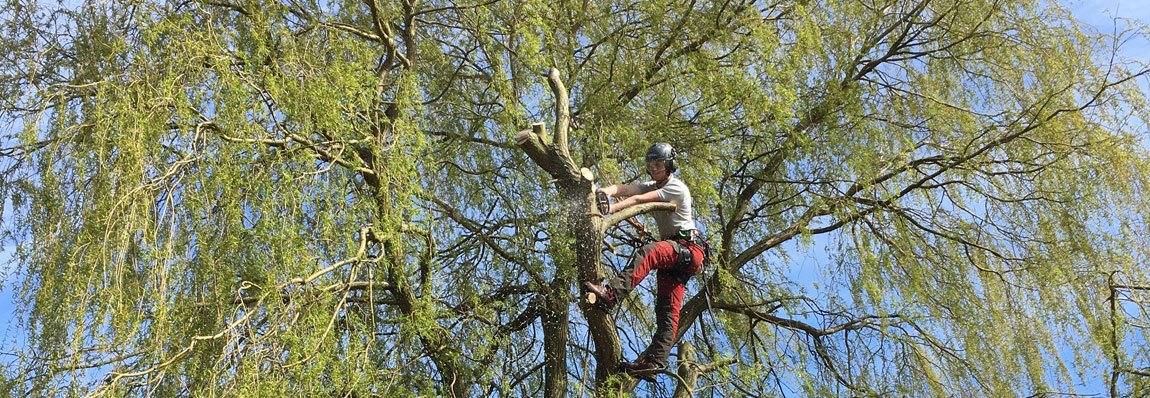 Tree Work Leicestershire